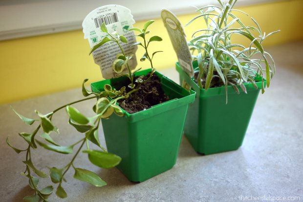 scotch-canister-planters-16