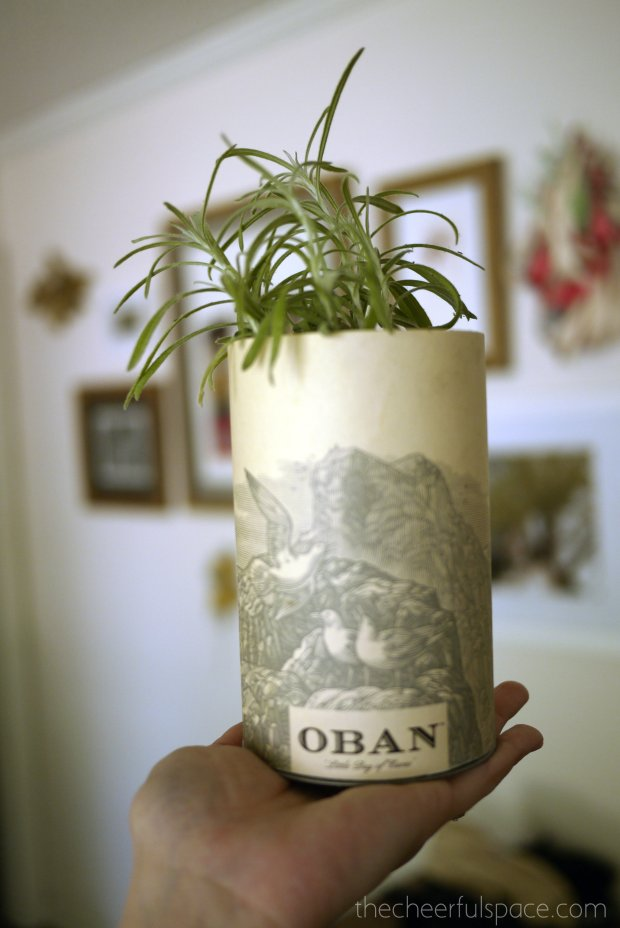 scotch-canister-planters-17