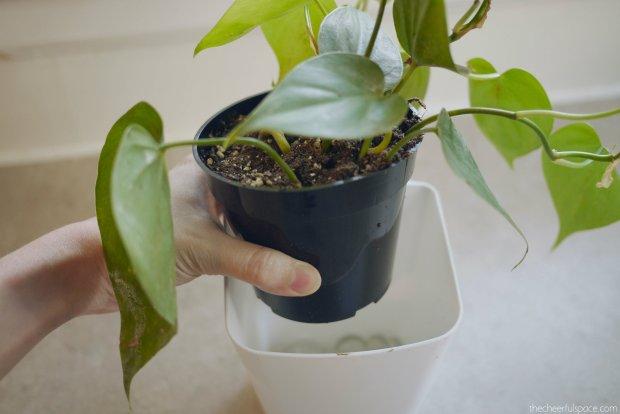 living-plant-wall-08